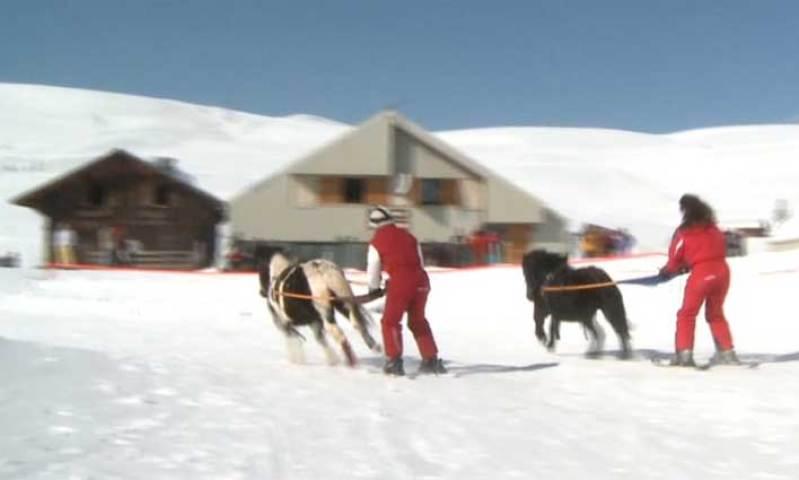 Que faire à l'Alpes d'Huez ? Le Ski Joering !